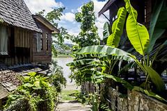 Chiang Khong riverside (Cairoic) Tags: chiangkhong mekong bananas sunshine thailand border river riverside nearlao nearlaos alley verdant fecund cityscape