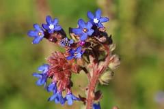 Wild Flower (Hugo von Schreck) Tags: hugovonschreck flower makro macro outdoor blume blte canoneos5dsr tamron28300mmf3563divcpzda010 onlythebestofnature