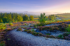 Rockford Path (burrills) Tags: path fuji landscape england rockfordcommon bracken newforest mist hampshire light sunrise heather winding morning colour velvia
