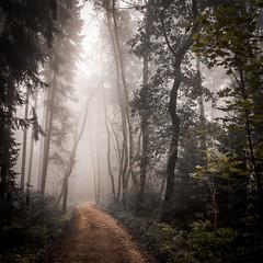 In the fog (matthiasstiefel) Tags: nebel fog mist dust wood trees