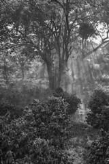 Songwa-Plantation,-Tanzania-2015