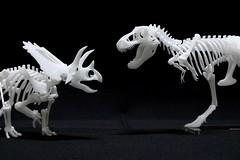 IMG_6882 (Barman76) Tags: bonelab trex tyrannosaur skeleton plastic laser cut