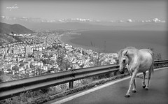 memphoto Fujifilm FinePix S5Pro (Mem Photo) Tags: fujifilm finepix s5pro memphoto horse salerno view sea gulf