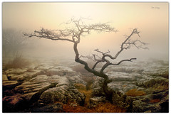 devoid (seve) Tags: england sunlight mist tree apple weather fog photoshop canon dead photography eos 350d mac aperture rocks walks flickr imac cloudy hiking path osx steve foggy atmosphere walkway elements cumbria canon350d gnarly macosx gregory topaz knott appleaperture thegalaxy farleton 240mm appleimac stevegregory borderfx ringexcellence applecrypt httpwwwflickrcomphotosapplecrypt httpapplecryptblogspotcom httpapplecrypttumblrcom httppinterestcomapplecrypt httpapplecryptwordpresscom