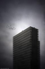 The roof (never ends) Tags: roof light shadow sky storm building birds illustration photomanipulation dark alone ciel montage toit immeuble oiseaux seul sommet edmika