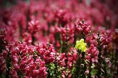 Quiero Ser Diferente (Fotomondeo) Tags: flowers light people espaa flores luz valencia night noche spain nikon gente alicante d7000