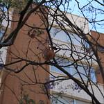 Portal Cullera (11) Placeta Porquets. Fruit Arbre. Sueca. 19-5-2012 thumbnail