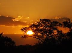 African Sunset (anacm.silva) Tags: africa sunset southafrica nikon pôrdosol krugernationalpark krugerpark kruger silhuetas áfrica áfricadosul anasilva nikond40x