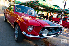 "Mustang • <a style=""font-size:0.8em;"" href=""http://www.flickr.com/photos/54523206@N03/7536942756/"" target=""_blank"">View on Flickr</a>"