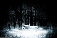Lost in love (exercise ps) (Marco San Martin) Tags: lost magico magic caballo caballito blanco white black dark mistico mistic marcosanmartin