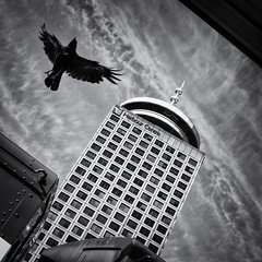 One flew over Waterfront Station (. Jianwei .) Tags: windows sky urban bw bird vancouver reflections square downtown grains crow harbourcentre timing waterfrontstation westcoastexpress a55 kemily tyeechoice