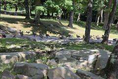 West Virginia 6-12-582 (Cwrazydog) Tags: thomas stewart westvirginia davis parsons blackwaterfalls elkins grafton philippi belington morantown