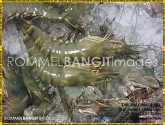 Tiger Prawn IMG02844-20120528-1929 (ROMMEL BANGIT BB4) Tags: photojournalism rightsmanaged melphoto rommelbangit daddypro rommelbangitimages