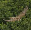 Falcon (Anthony (Tony) Clark) Tags: southernireland salteeisland freedomtosoarlevel3birdphotosonly