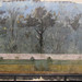 Painted Garden, Villa of Livia, detail with garden gate