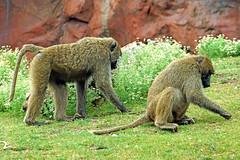 toronto canada zoo novascotia sony free dennis jarvis iamcanadian freepicture dennisjarvis archer10 dennisgjarvis nex7 18200diiiivc