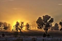 20120802_WinterMorning_0007 (_Scorps_) Tags: trees winter sun fog sunrise frost day open cano 7d abc silouhette scorpssting abcopen:project=winter abcopen:project=yourbest