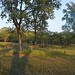 "Illinois Land for Sale - 480 Acres in Knox County • <a style=""font-size:0.8em;"" href=""http://www.flickr.com/photos/66358149@N06/7698821192/"" target=""_blank"">View on Flickr</a>"