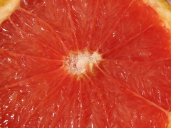 Pink grapefruit close up