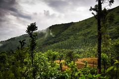 Green valley (Karthikeyan.chinna) Tags: karthikeyan chinna chinnathamby canon canon5d green nature travel valley estate mountain hill kuduremukha karnataka westernghats clouds trekking