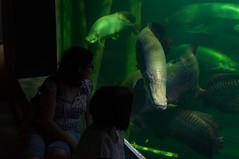 Acuario Agosto 2016 (66) (Fernando Soguero) Tags: acuario zaragoza acuariodezaragoza aragn turismo aquarium nikon d5000 fsoguero fernandosoguero