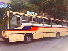 vegetable bus