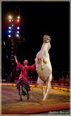 Circus Krone, Germany (DirkJan Ranzijn Circus Photography) Tags: beautiful mooi knap act acts circus zirkus circo cirque show voorstelling vorstellung lights horse horses paard paarden pferd pferden krone circuskrone bigtop germany duitsland audience publiek publikum