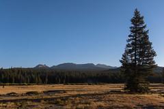 IMG_3448 (dangerismycat) Tags: yosemitenationalpark california raggedpeak tuolumnemeadows sunrise