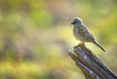 Early bird got the bug at Pilanesberg National Park, South Africa (Sumarie Slabber) Tags: bird birding nature fauna pilanesbergnationalpark sumarieslabber southafrica travel wild northwest bug