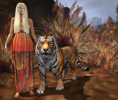 I Bless The Rains Down In Africa (lauragenia.viper) Tags: catwa catwacandy catwahead esode glitterposes isadorablecreations justanimals letituier lumipro maitreya swank secondlifefashion outdoor blond avatar tiger