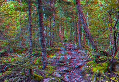 Rocky path in Ontario 3-D / Anaglyph / Stereoscopy / HDR / Raw (Stereotron) Tags: north america canada province ontario tree plants forest woods outback backcountry indiansummer autumn fall anaglyph anaglyph3d redcyan redgreen optimized anaglyphic anabuilder 3d 3dphoto 3dstereo 3rddimension spatial stereo stereo3d stereophoto stereophotography stereoscopic stereoscopy stereotron threedimensional stereoview stereophotomaker stereophotograph 3dpicture 3dglasses 3dimage twin canon eos 550d yongnuo radio transmitter remote control synchron in synch kitlens 1855mm tonemapping hdr hdri raw