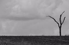 ... left alone (M.a.r.t.Y) Tags: natura albero tree cloud nuvole rain
