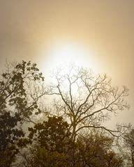 """Autumn Fog Returns""_AuroraSingle-HDR (john4jack) Tags: fog shootingstar"
