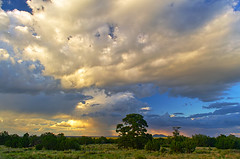 DSC_0046-48 monsoon over coconino plateau hdr 850 (guine) Tags: clouds monsoon trees plants grass sunset coconinoplateau hdr qtpfsgui luminance