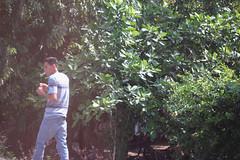 Film01 (NolesyReil_) Tags: film man smoking green tree forest grass light sun walking