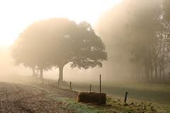 (martine_ferron) Tags: matin brume arbre automne