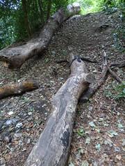 Moseley Bog - wooded area (ell brown) Tags: moseleybog shirecountrypark theshirecountrypark pensbyclose sarehole moseley birmingham westmidlands england unitedkingdom greatbritain joyswoodlocalnaturereserve jrrtolkien lordoftherings thehobbit thelordoftherings yardleywoodrd tree trees birminghamcitycouncil thewildlifetrust moseleybogandjoyswood