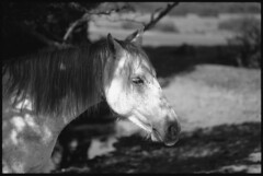 NF Pony (fawcetownsley) Tags: film pony blackandwhite 100mm zuiko olympus 25asa 1to150 diy developer euromaster lightmeter bw schwarzweiss rodinal 7min fixer kodak lens om1 sw technicalpan techpan sunny16 v500