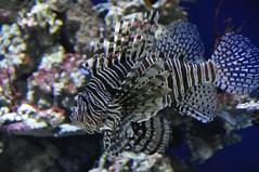 Fish (crwilliams) Tags: monterey california montereycounty unitedstates