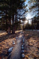 Trail (beyondramen) Tags: tuolumnemeadows yosemite