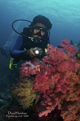 Raja Reef Gardens #72 (Digidiverdave) Tags: wideangle colourful fins corals reefs divebuddies softcorals davidhenshaw rajaampat seafans hardcorals