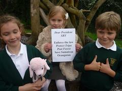 West Ashton School, Trowbridge, Wiltshire, England (endoftheicons) Tags: orangutan internationaldayofaction