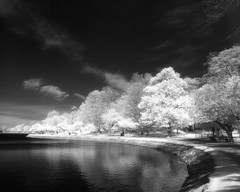 Spring Path (Dr. RawheaD) Tags: cloud white reflection water digital speed cherry graphic kodak 14 reservoir mc infrared f56 brookline pro1 graflex hie schneiderkreuznach 75mm pacemaker r72 ddx superangulon kenk ilfotec