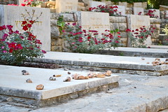 Tel Hai Cemetery (Marisa Ross) Tags: flowers cemetery stone israel nikon rocks asia military middleeast rows jew jewish jews marble 1855mm judaism hebrew israeli birthright telhai birthrightisrael taglit militaryoutpost mayanot d3100 nikond3100