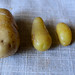May 27th 2012 - Family of Potatoes