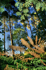 bright forest (justyourcofchi) Tags: blue trees light sunset england sky orange sun sunlight colour green leaves forest woodland countryside model woods flickr photographer shine bright through ferns chiarnold justyourcupofchicom justyourcupofchi