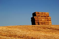 Montagna di paglia (Jessica Villarreal) Tags: italy campagna e tra grano ostra castelbellino campagnamarchigiana