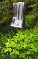 The Spice Of Spring (Aaron Reed Photography) Tags: motion fern green leaves oregon photography waterfall spring photographyclass photographers stockphotos pacificnorthwest silverfallsstatepark stockimages professionalphotography blackwhitephotography photographyschool fineartphotographs skyphotographs lakephotographs aaronreed naturephotographs abstractphotographs landscapephotographs photographytraining framedartprints sunsetphotographs artphotographs sunrisephotographs aaronreedphotography surrealphotographs redphotographs waterphotographs cityscapephotographs cloudsphotographs duskphotographs reflectionphotographs exposurenorthwest bluephotographs aaronreedphotographer landscapephotographygallery mountainsphotographs orangephotographs pavementphotographs whatislandscapephotography whatisstockphotography aaronreedart aaronreedprints aaronreednature aaronreedaluminumartprints yellowphotographs bridgephotographs buildingsphotographs twilightphotographs roadphotographs aaronreedmetalprints aaronreedacrylicfacemountprints