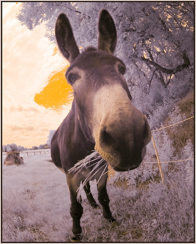2012 07 01 Esel Donkey through the Fisheye