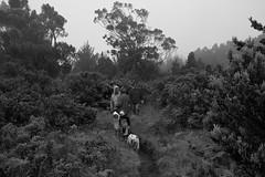 Mistical (Thncher Photography) Tags: bw clouds hawaii blackwhite maui haleakala crater fx rf